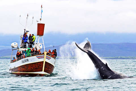 Guided tours in Husavik